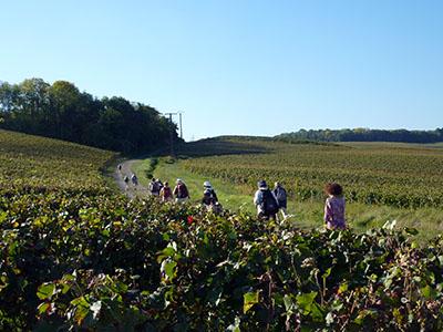 Aide  LAgritourisme Et  LOenotourisme  Agriculture Pays De La Loire
