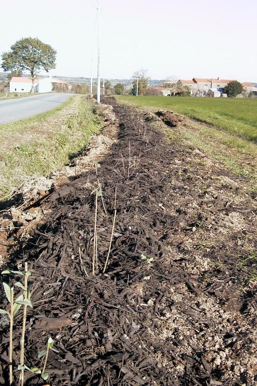 Aide  La Plantation DArbres Ou De Haies  Agriculture Pays De La Loire