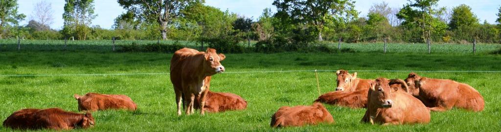 ThorignDAnjou  Agriculture Pays De La Loire